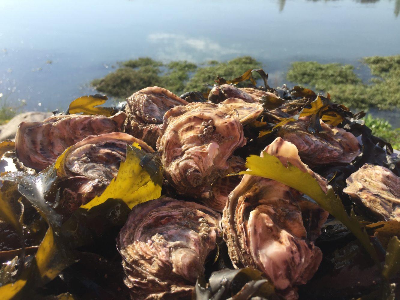 huîtres3