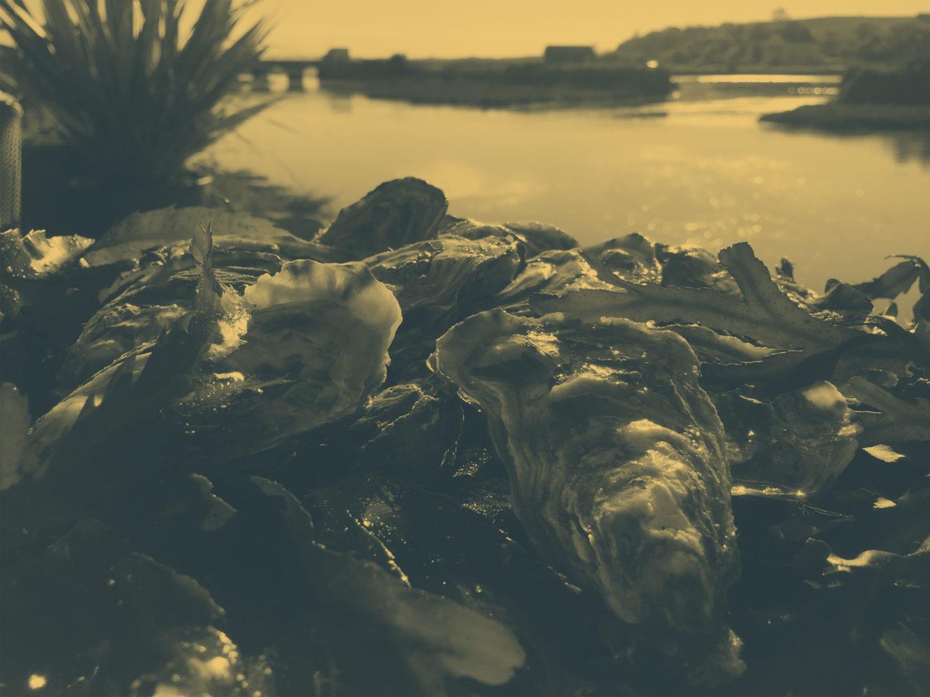 huîtres7-filtre