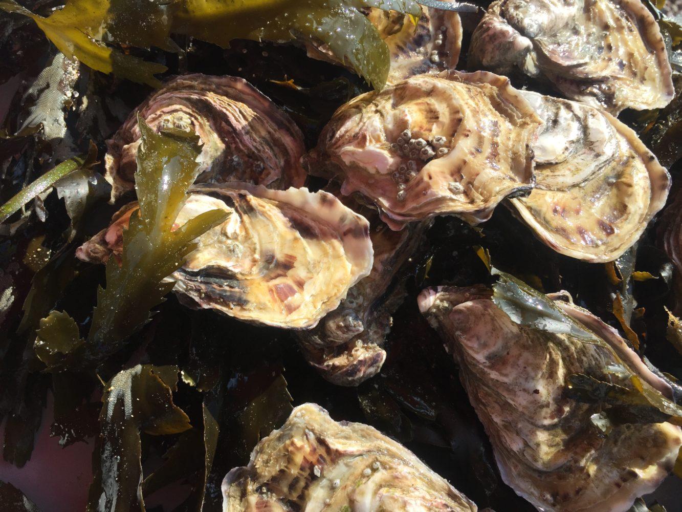 huîtres1